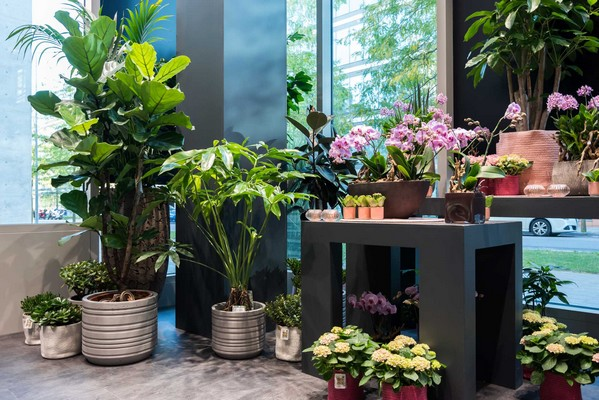 Iris Fleurs - Boutique Kirchberg