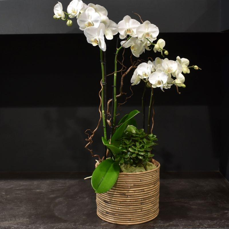 Coupe D'orchidées Moyenne