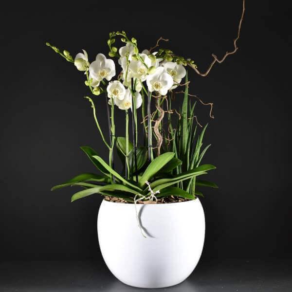 Coupe D'orchidées Grande
